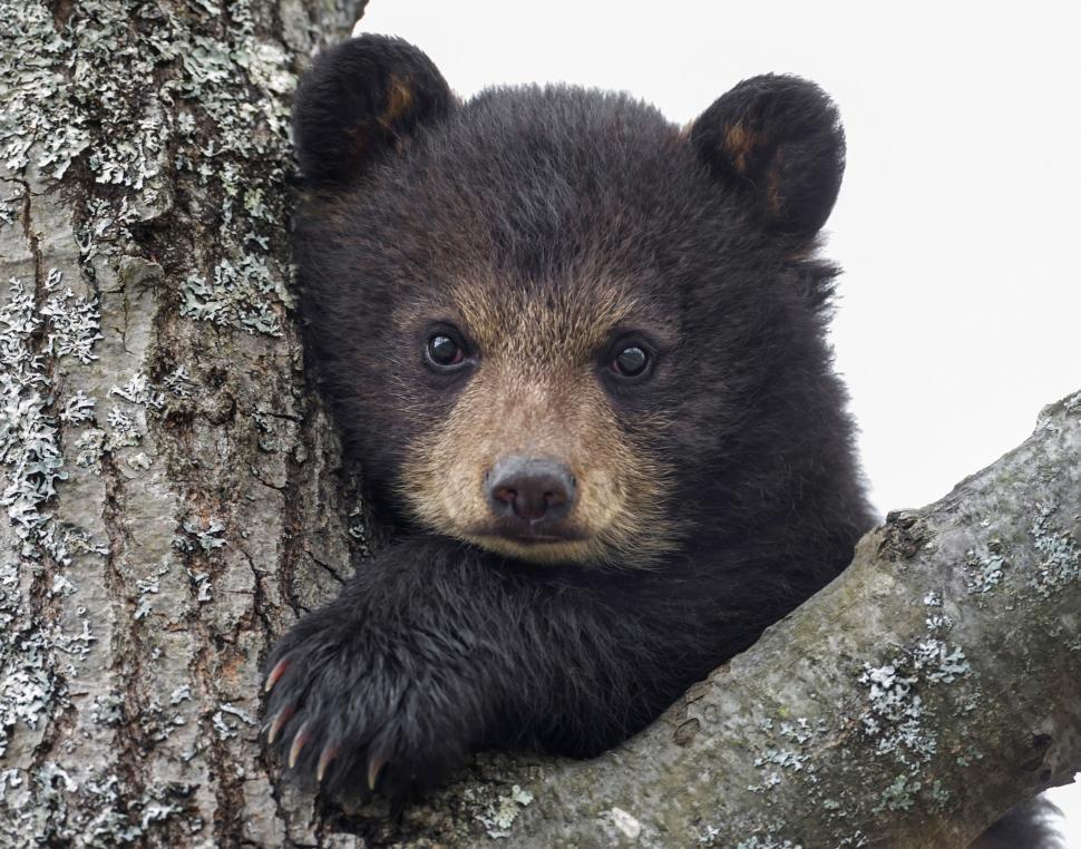 Cute Babies Wallpapers Hd Download Baby Bear Wallpaper Animals Wallpaper Better
