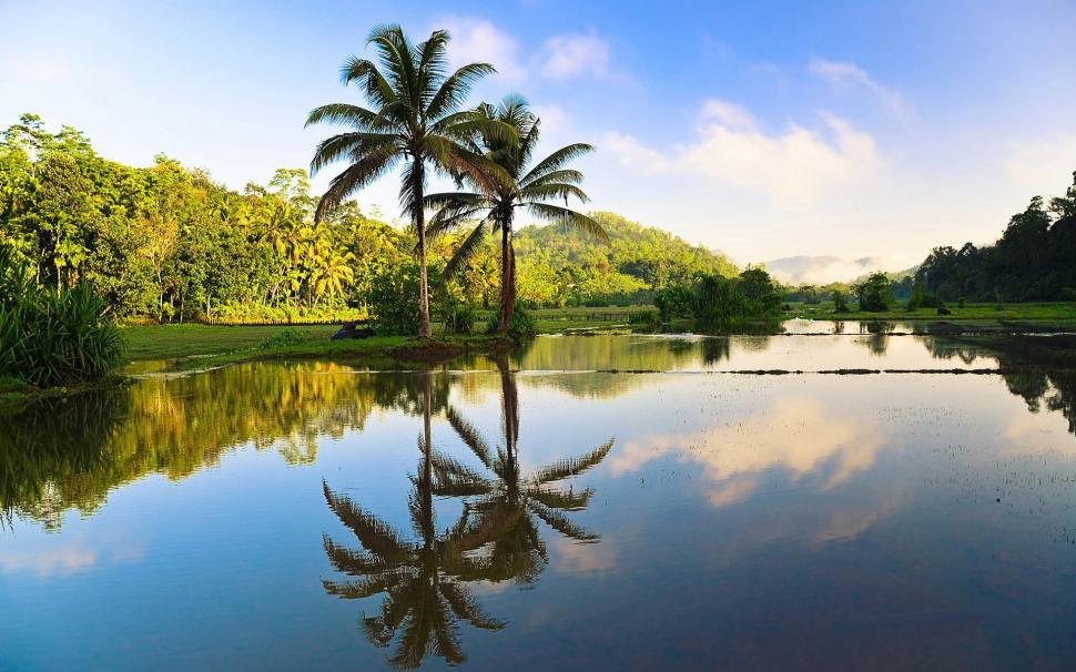 Beautiful Fall Location Wallpapers Sri Lanka Beautiful Nature Trees Palms Water Reflection