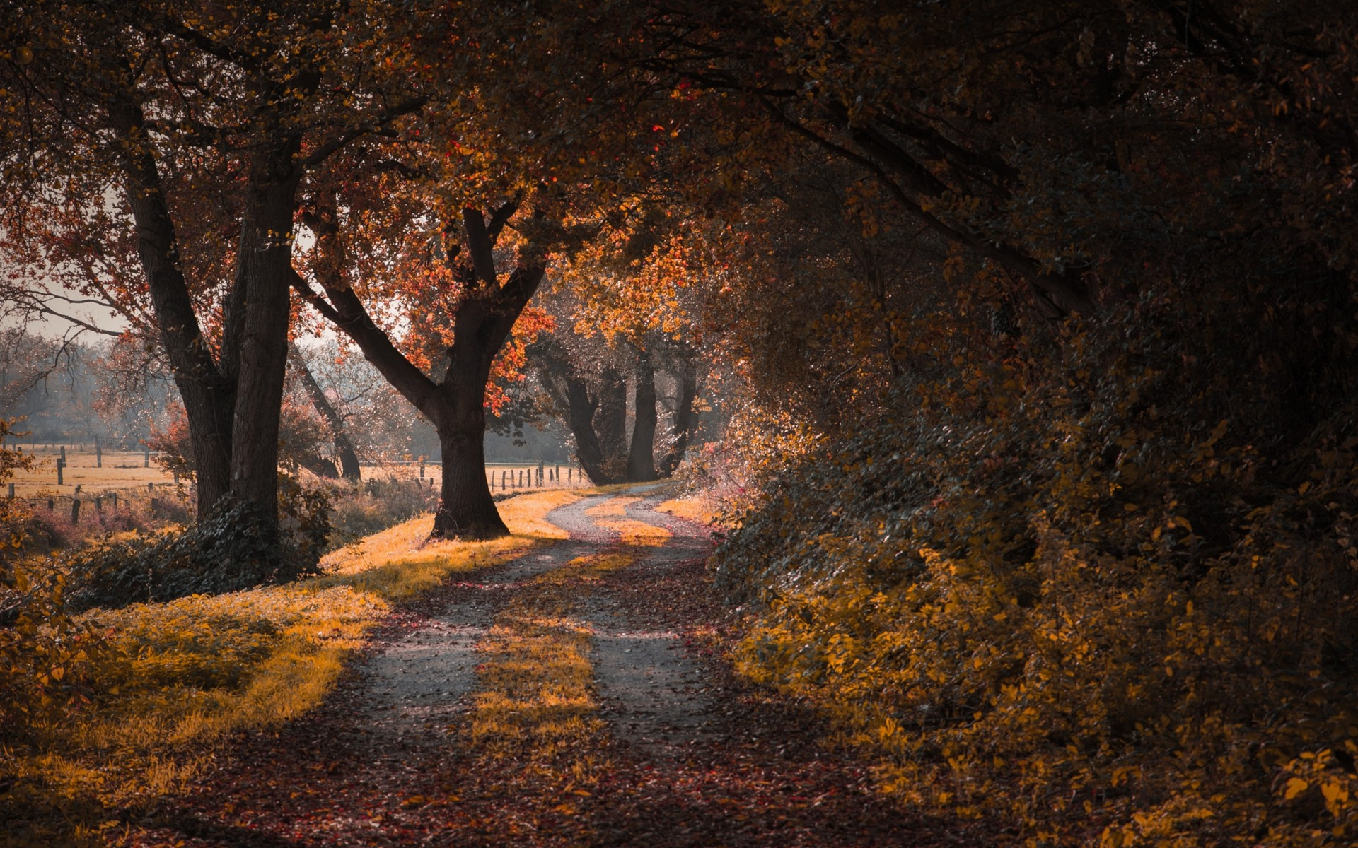 Autumn Falling Leaves Wallpaper Landscape Nature Road Fall Trees Leaves Shrubs
