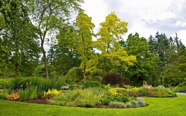 nature grass park green garden