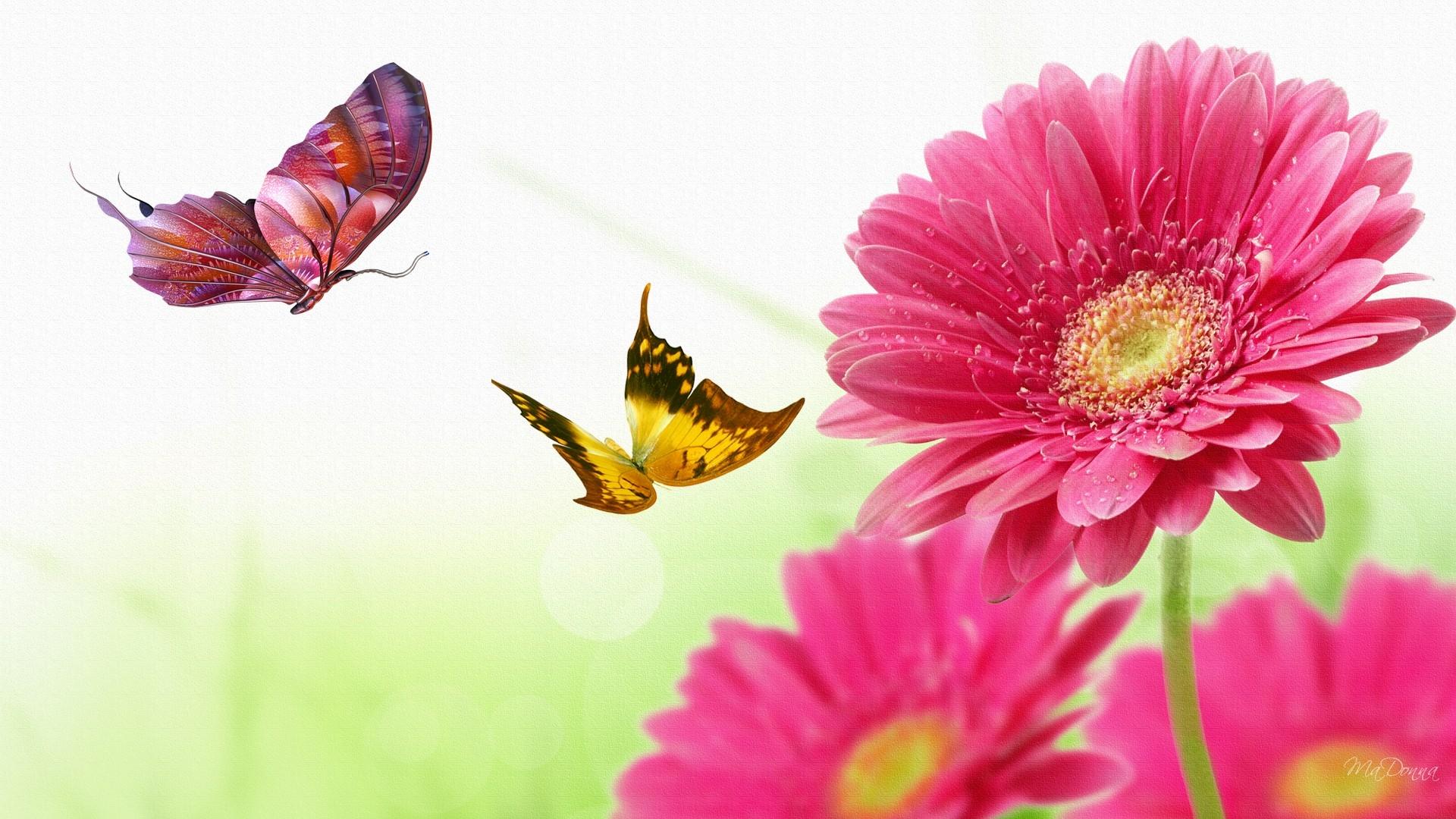 Galaxy S5 Fall Wallpaper Gerber Daisy Butterfly Dance Bright Butterflies Daisies