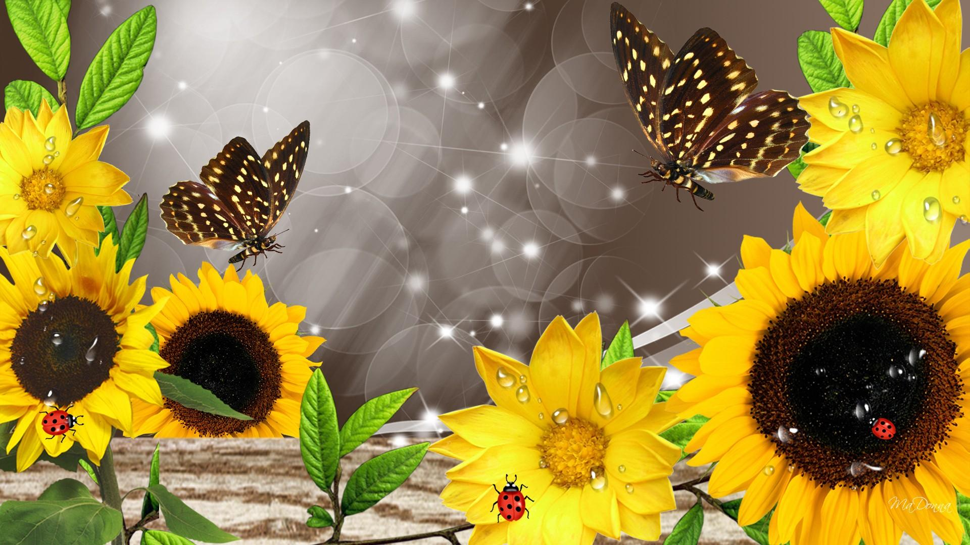 Sunflowers After The Rain wallpaper  water  Wallpaper Better