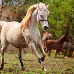 Running Horse Wallpaper Animals Wallpaper Better