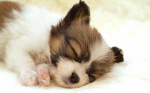 Download Cute Love Mobile Wallpapers Nokia E71 Dog Laptop Backgrounds Wallpaper Animals Wallpaper Better