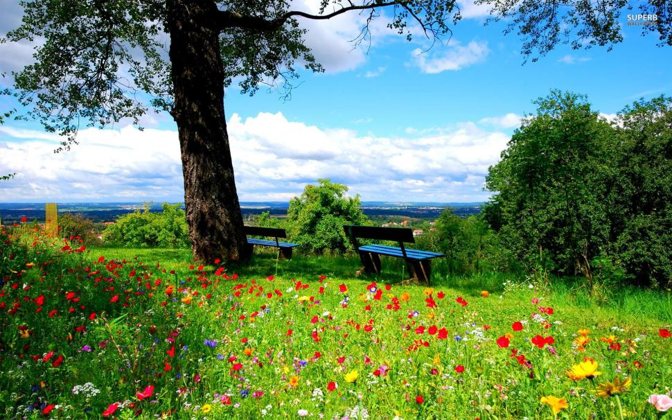 images Spring Scenery Wallpaper a beautiful spring day wallpaper