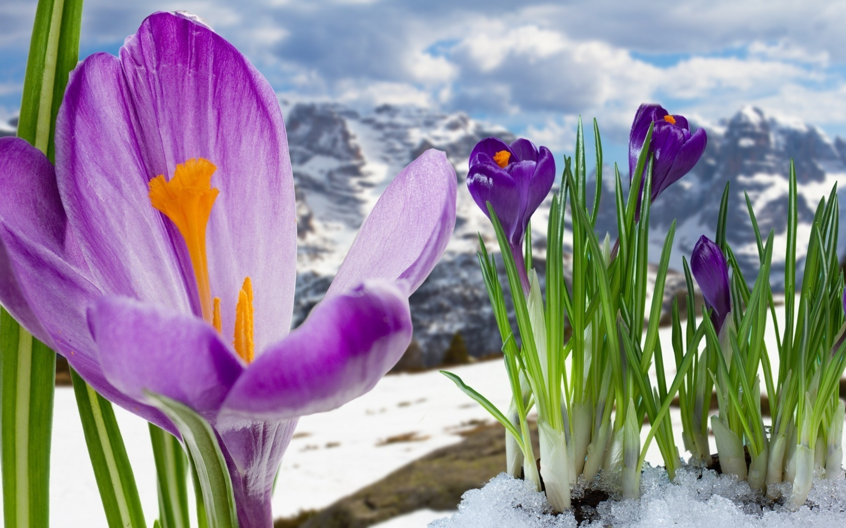Beautiful Colorful Girls Anime Wallpaper Spring Mountain Flowers Wallpaper Nature And Landscape