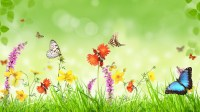 Spring, flowers, grass, butterfly, green background