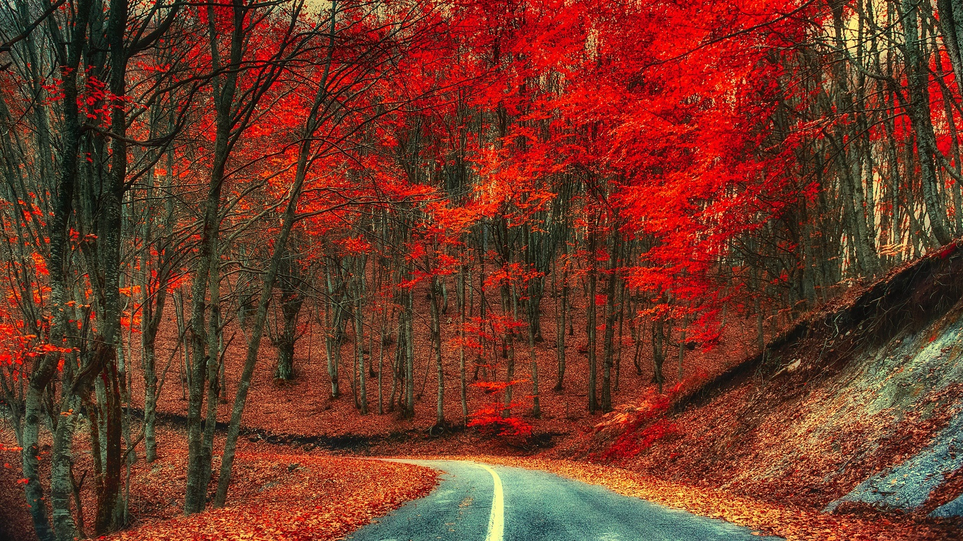 4k Laptop Wallpaper Fall Forest Autumn Road Trees Foliage Red Leaves Wallpaper