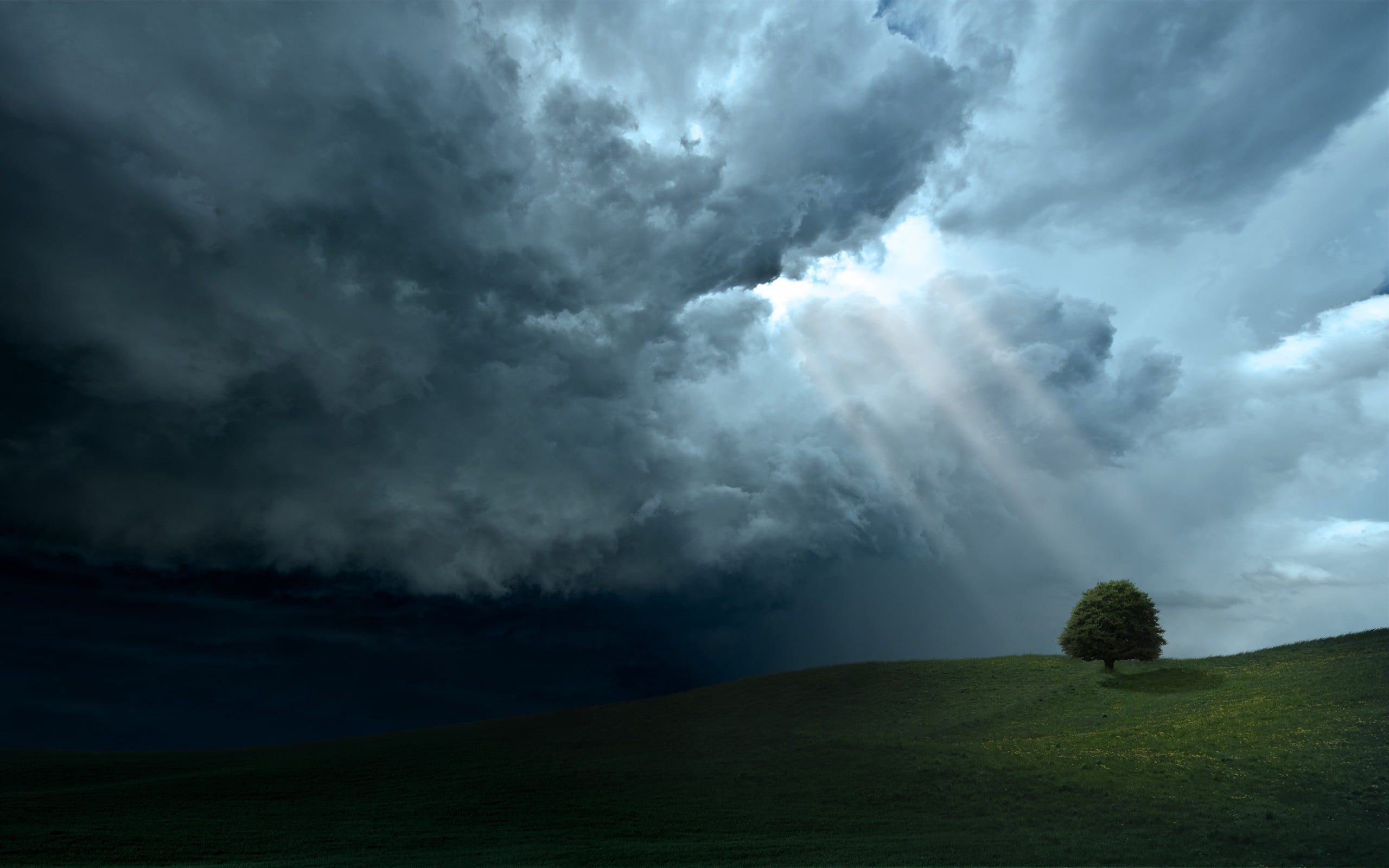 tree under dark clouds