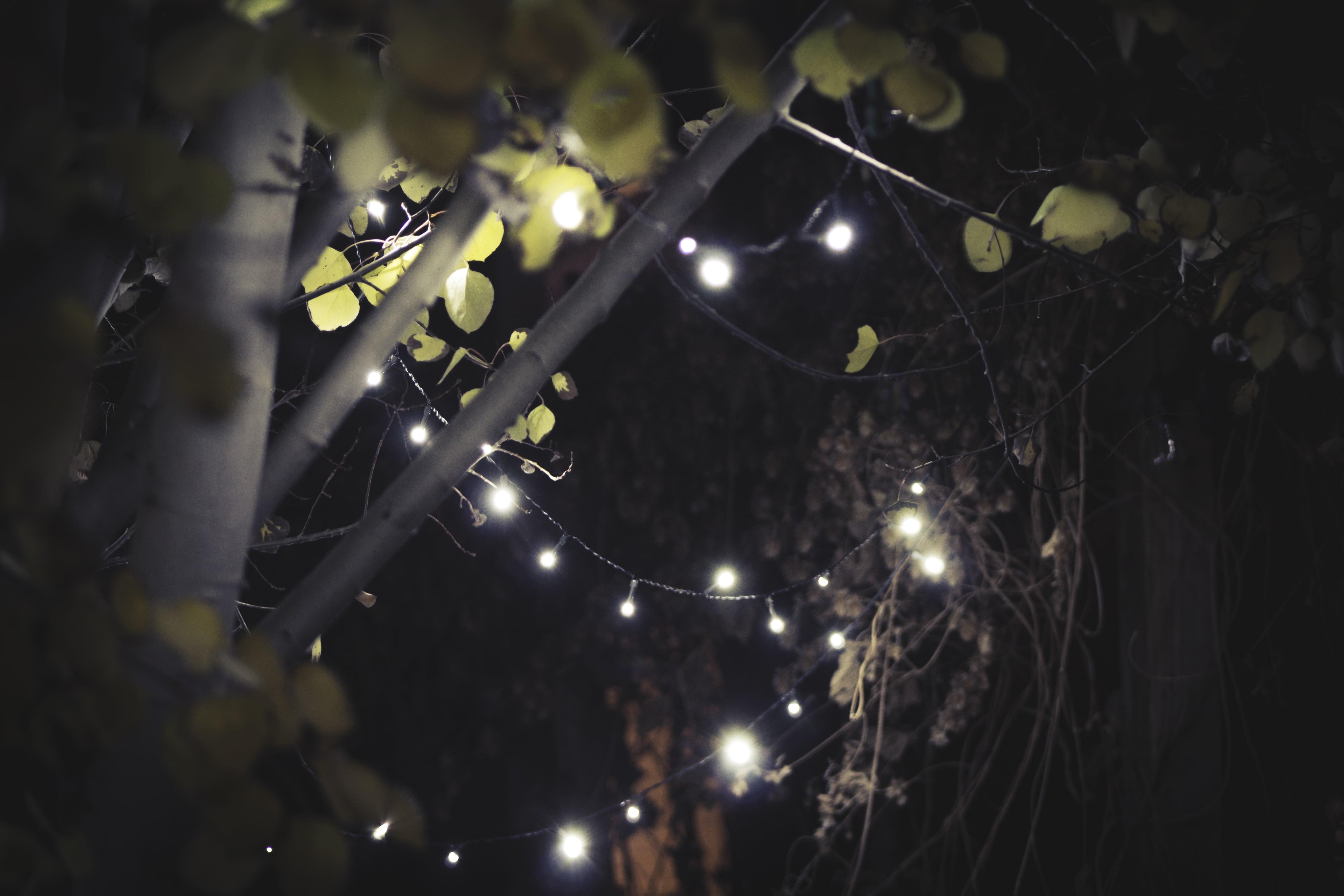 white string lights leaves