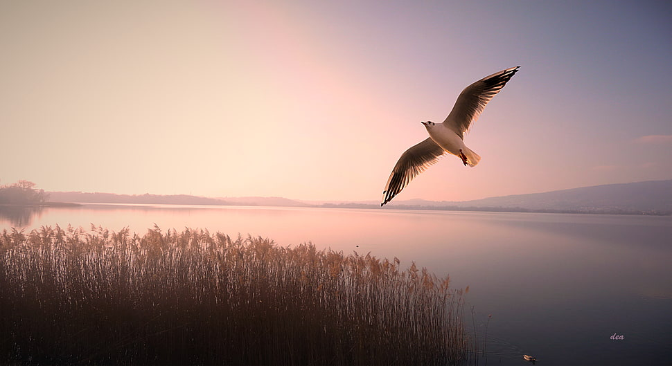 Iphone 2g Wallpaper For Iphone X Bird Flying In Sky Over Body Of Water Hd Wallpaper