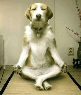 Cute Baby Wallpaper Hd Free Download Download Dog Doing Yoga Funny Wallpapers For Your Mobile