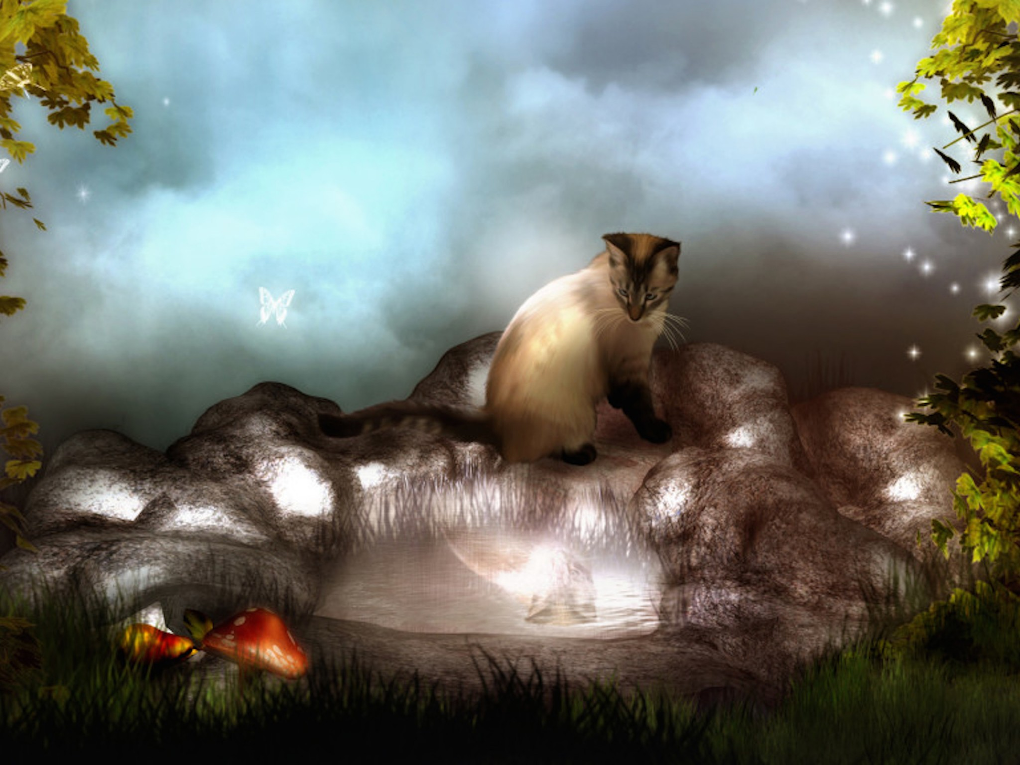 Cute Baby Wallpaper For Facebook Fantasy Cat Wallpaper Free Desktop Downloads
