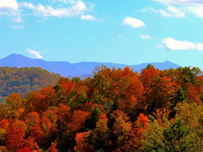 Gatlinburg In The Fall Wallpaper Fall Colors North Carolina Mountains Wallpaper Free