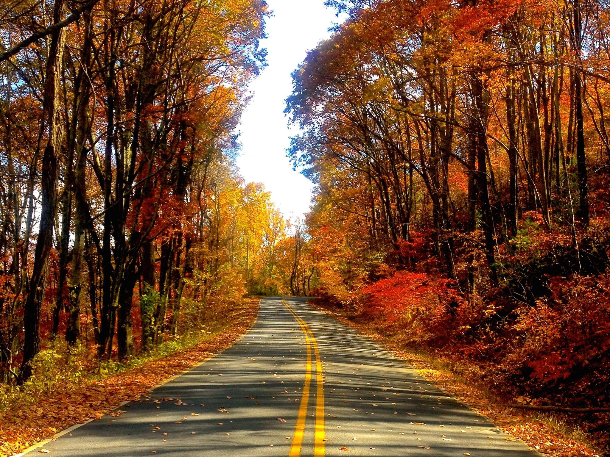 Blue Ridge Parkway Fall Wallpaper Autumn Road Hd Wallpaper Free Autumn Downloads
