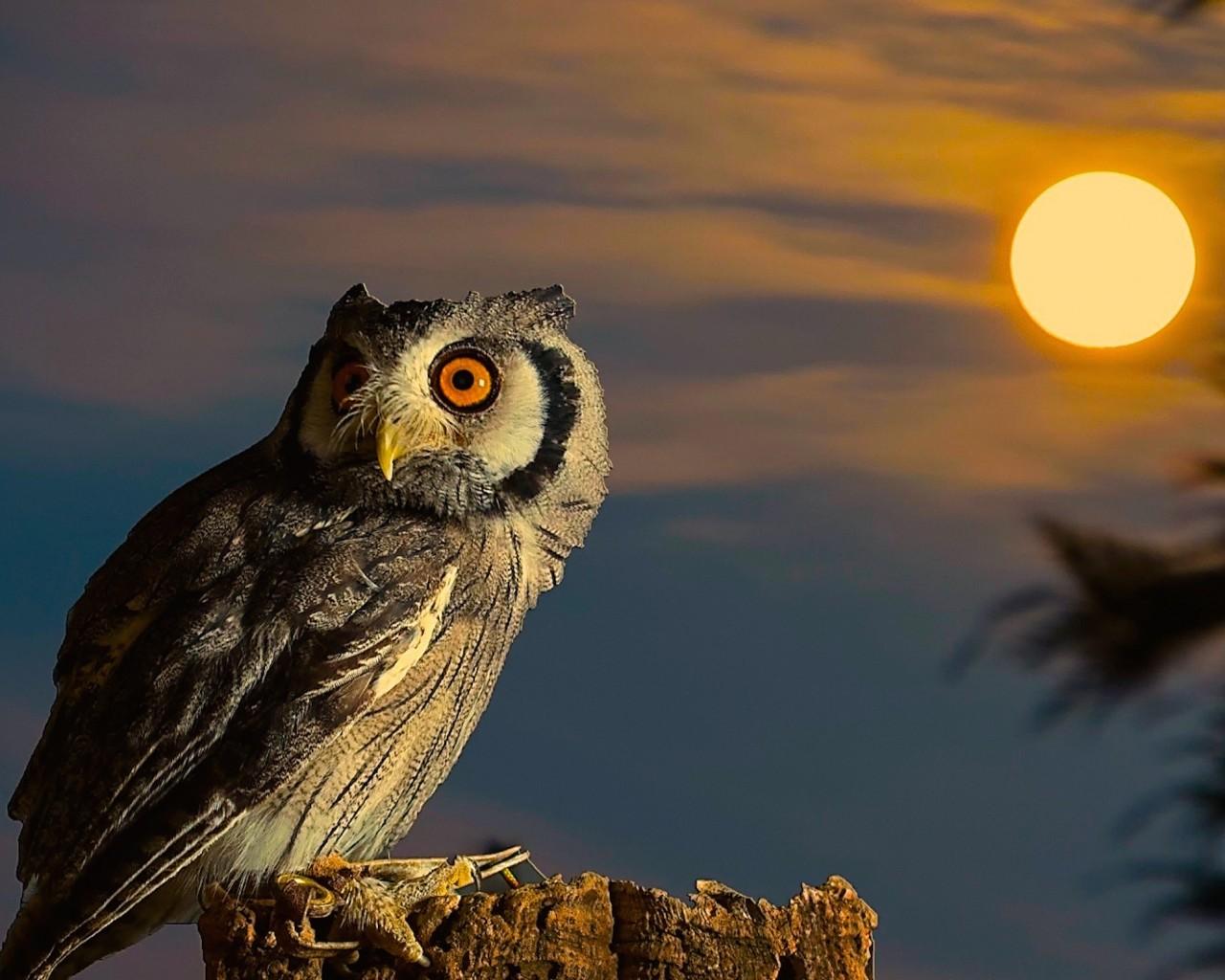 Cute Baby Pc Wallpaper Owl Full Moon Hd Wallpaper Free Hd Owl Downloads