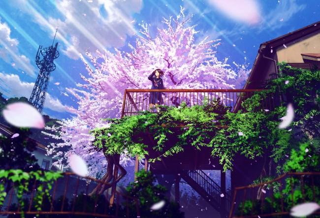 Anime Wallpaper Cherry Blossom Girl Wallpaper Anime Girl Nature Sakura Blossom Petals