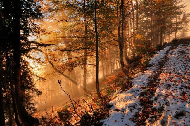 Bing Fall Desktop Wallpaper Wallpaper Autumn Snow Forest Hill Sunlight Fog