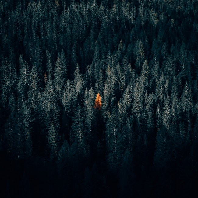Dark Fall Android Wallpaper Download 1440x900 Dark Forest Autumn Fall Aerial View