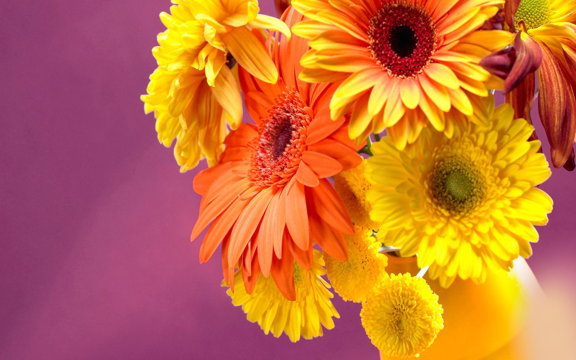 Fall Wallpaper For Android Tablet Gerbera Daisies 6826171 Wallpapers13 Com