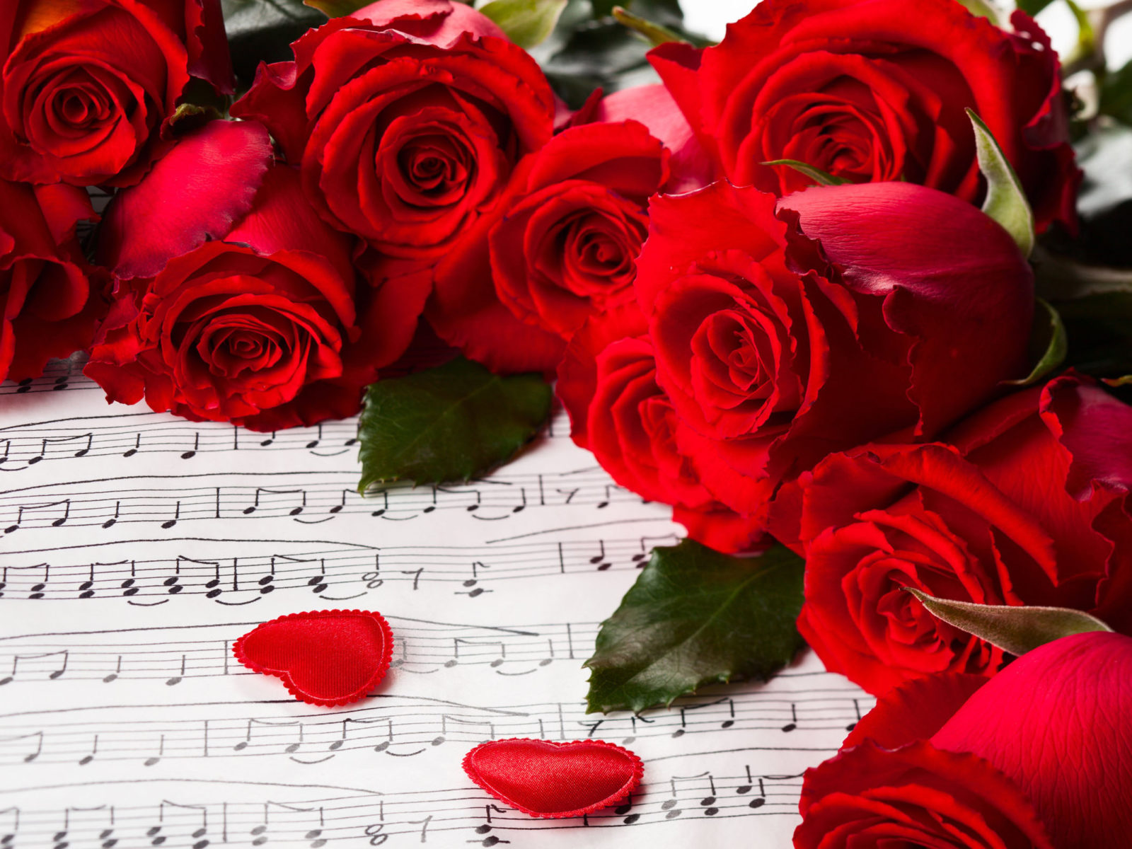 Cute Cats Wallpapers For Iphone Hearts Valentines Day Red Roses Nature For You Roses Music