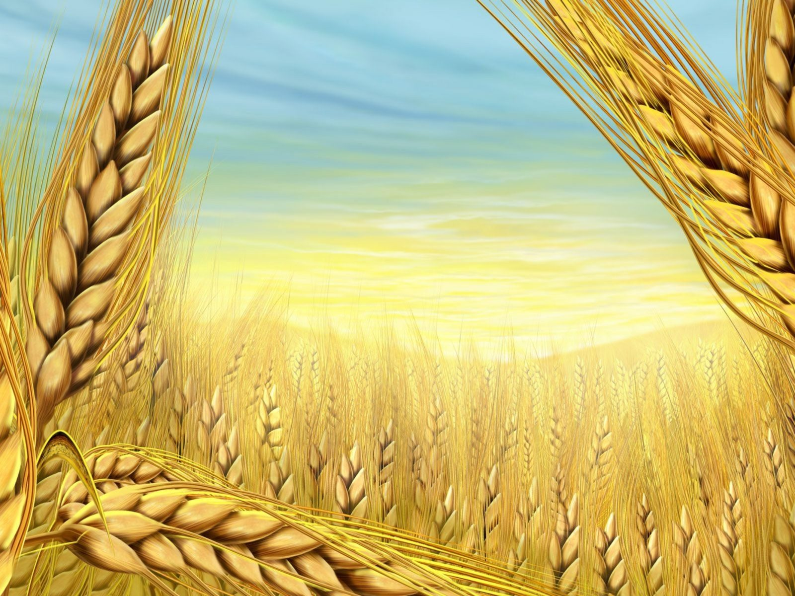 Paintings Multicolor Wheat Wallpaper 2560x1600