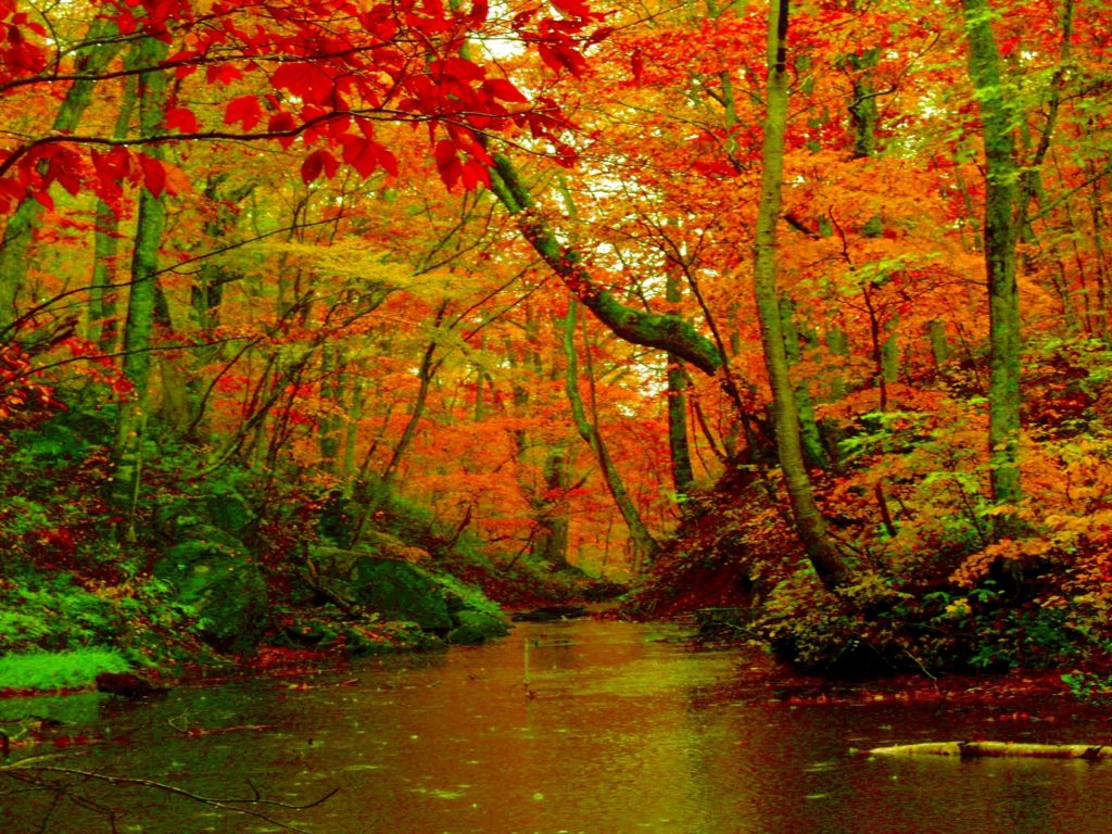 Clear Wallpaper Iphone X Autumn Forest River Desktop Background Hd Wallpapers 1560