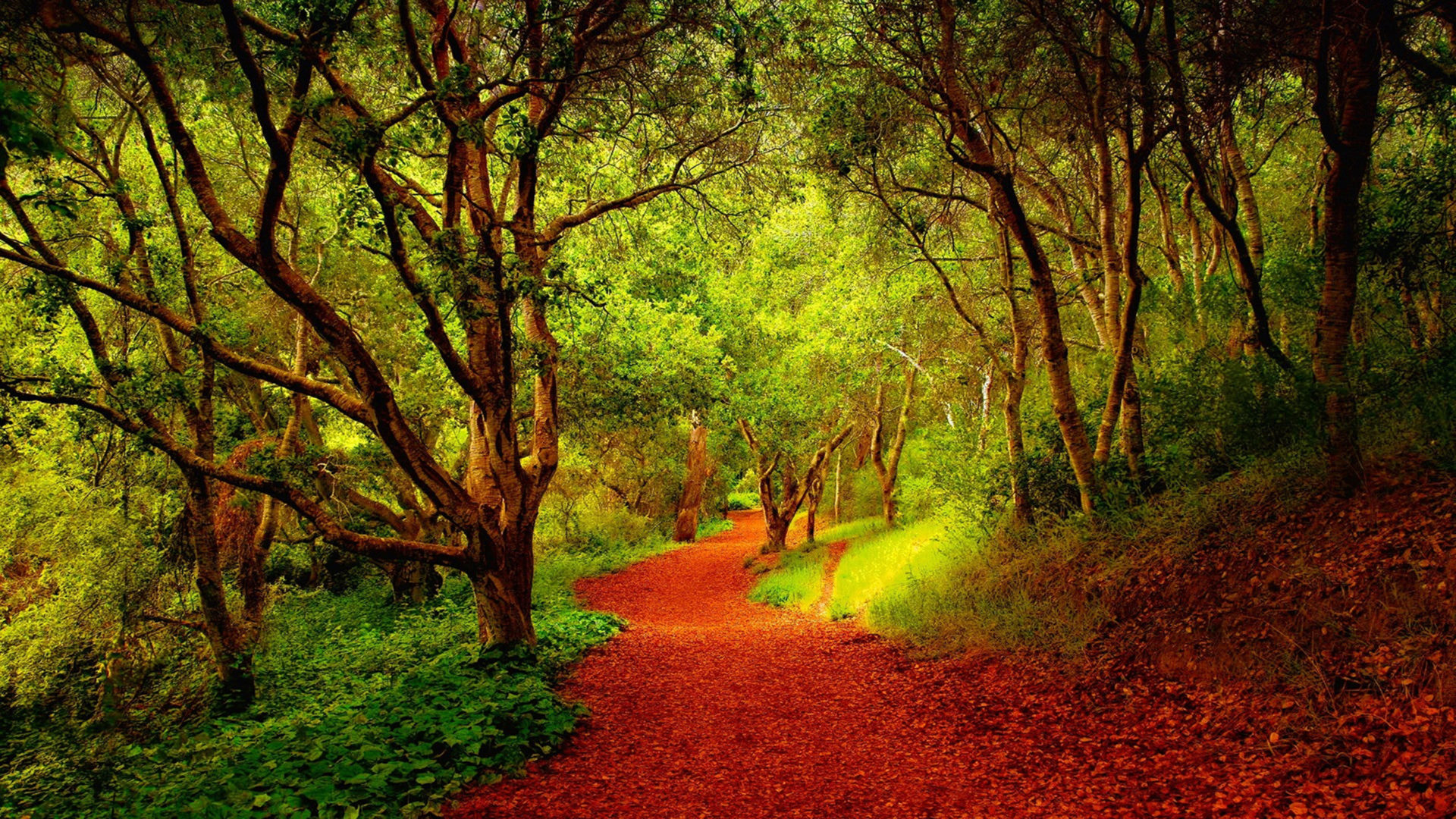 Fall Leaves Wallpaper Free Beautiful Forest Pathway 03846 Wallpapers13 Com