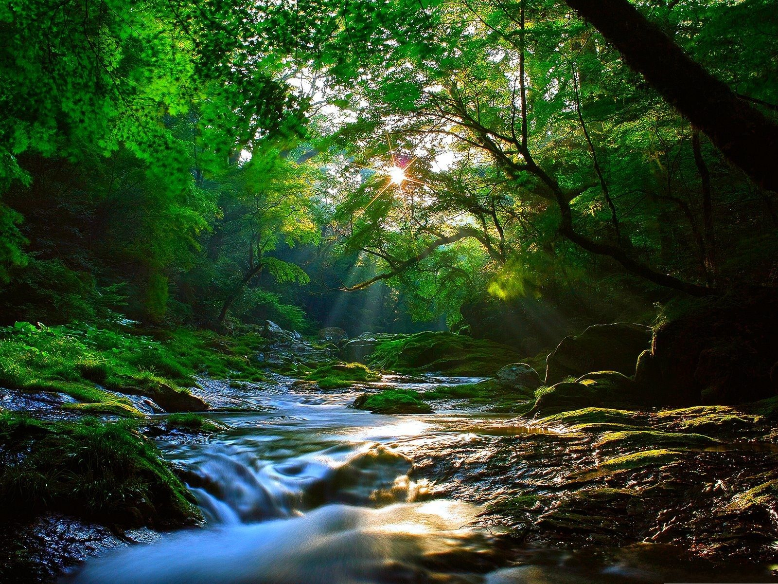 Free Fall Wallpapers Download Beautiful Sunlight At Forest Wallpaper 2560x1600