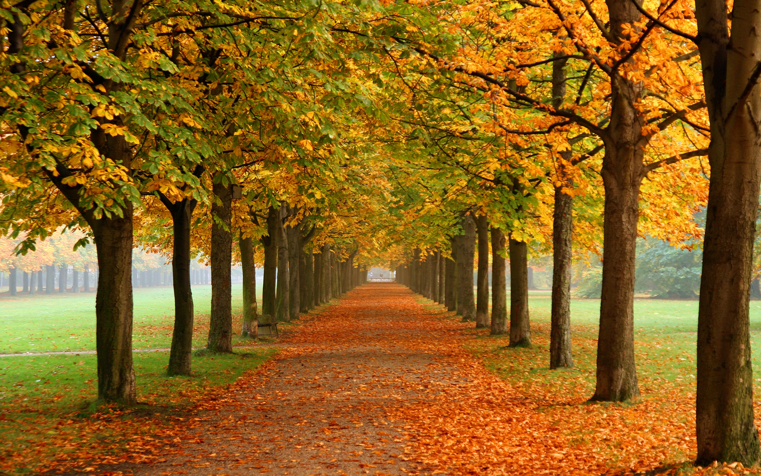Free Fall Wallpaper For Android Fall Nature Wallpaper Autumn Leaves 3d Fall Colors 0974