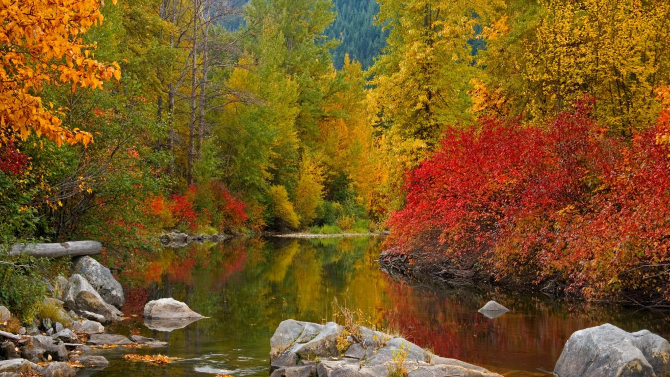 Fall Awesome Forest River Water Widescreen 2560x1600 Hd