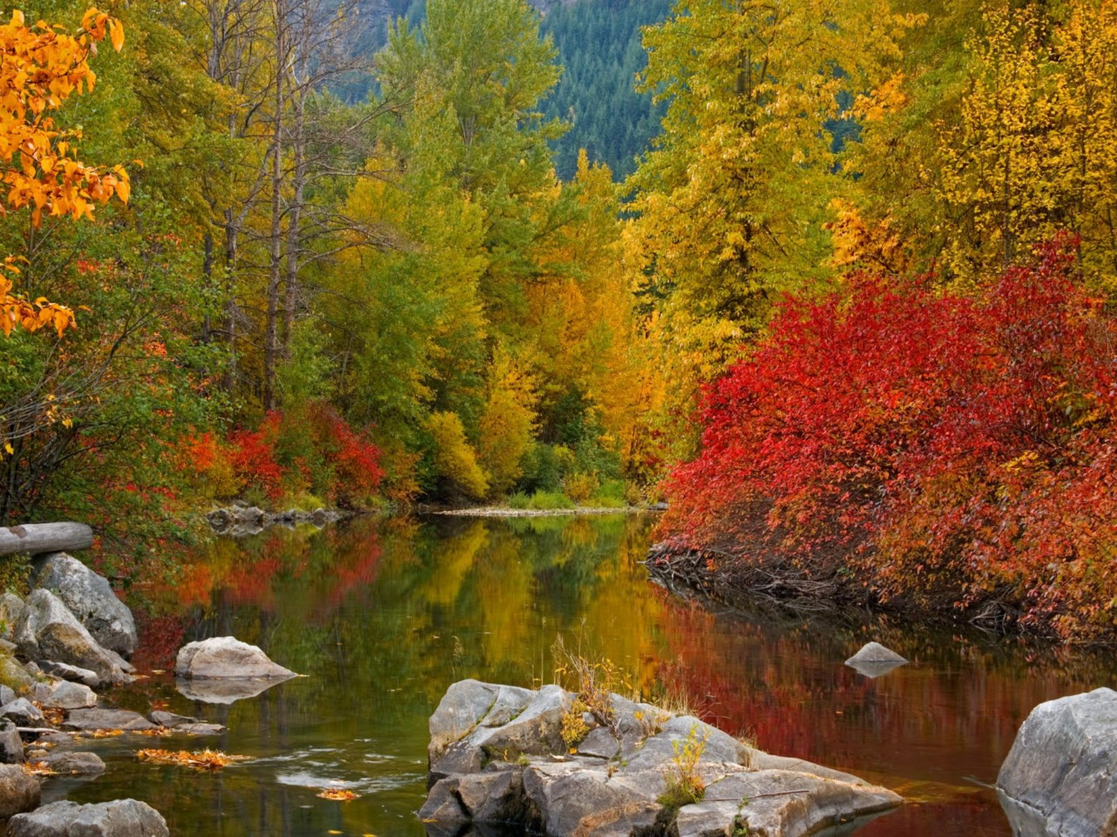 Fall Wallpaper For Computer Desktop Fall Awesome Forest River Water Widescreen 2560x1600 Hd