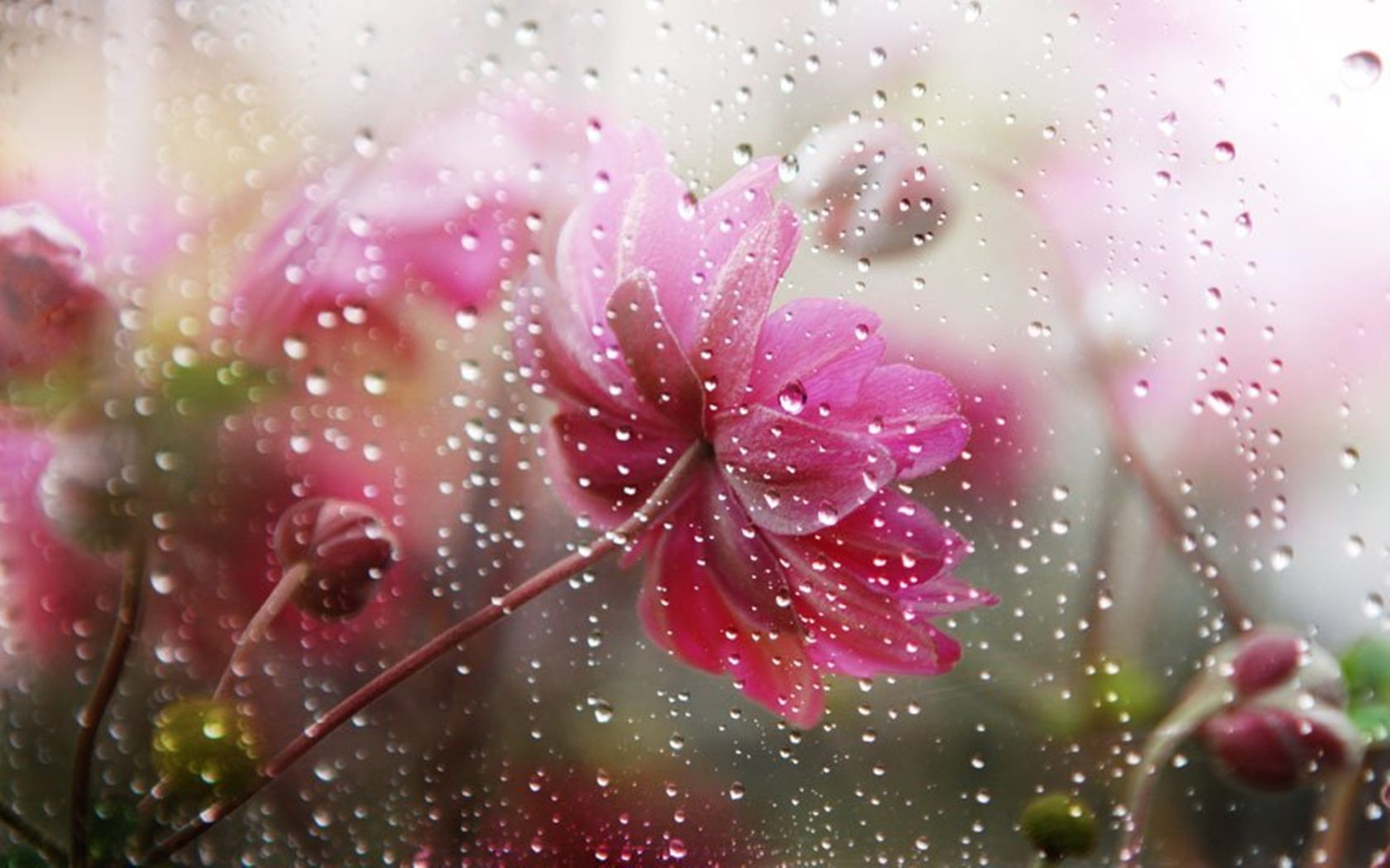 Free Animated Falling Leaves Wallpaper Falling Rain In Flower Flowers Under The Rain