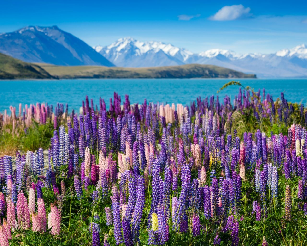 Stunning Fall Wallpapers Flowers Landscape Flowers Lake Splendor Water Mountains
