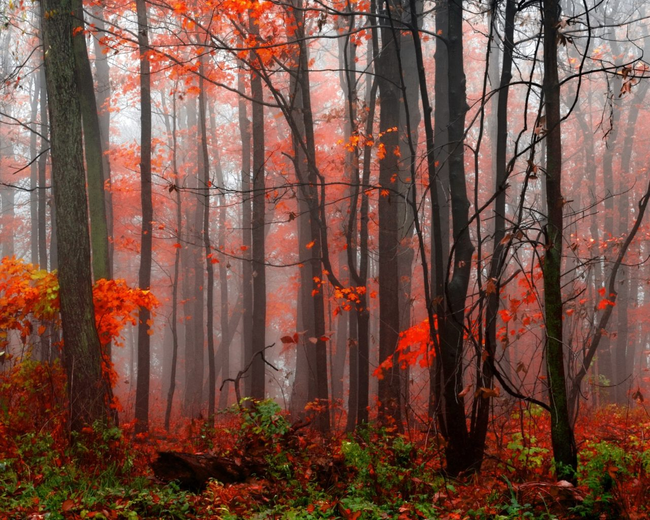 Fall Wallpaper For Android Tablet Forests Autumn Trees Fog Nature Wallpapers And Photos