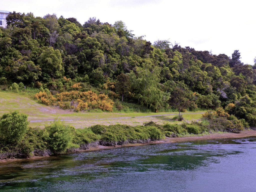 Fall Trees Background Wallpaper New Zealand Rivers Waikato River Trees Nature 410756