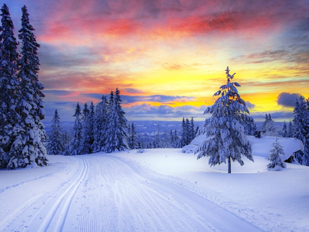 Fall Wallpapers For Iphone 4 Norway Winter Forest Snow Trees 1920x1080 Wallpapers13 Com