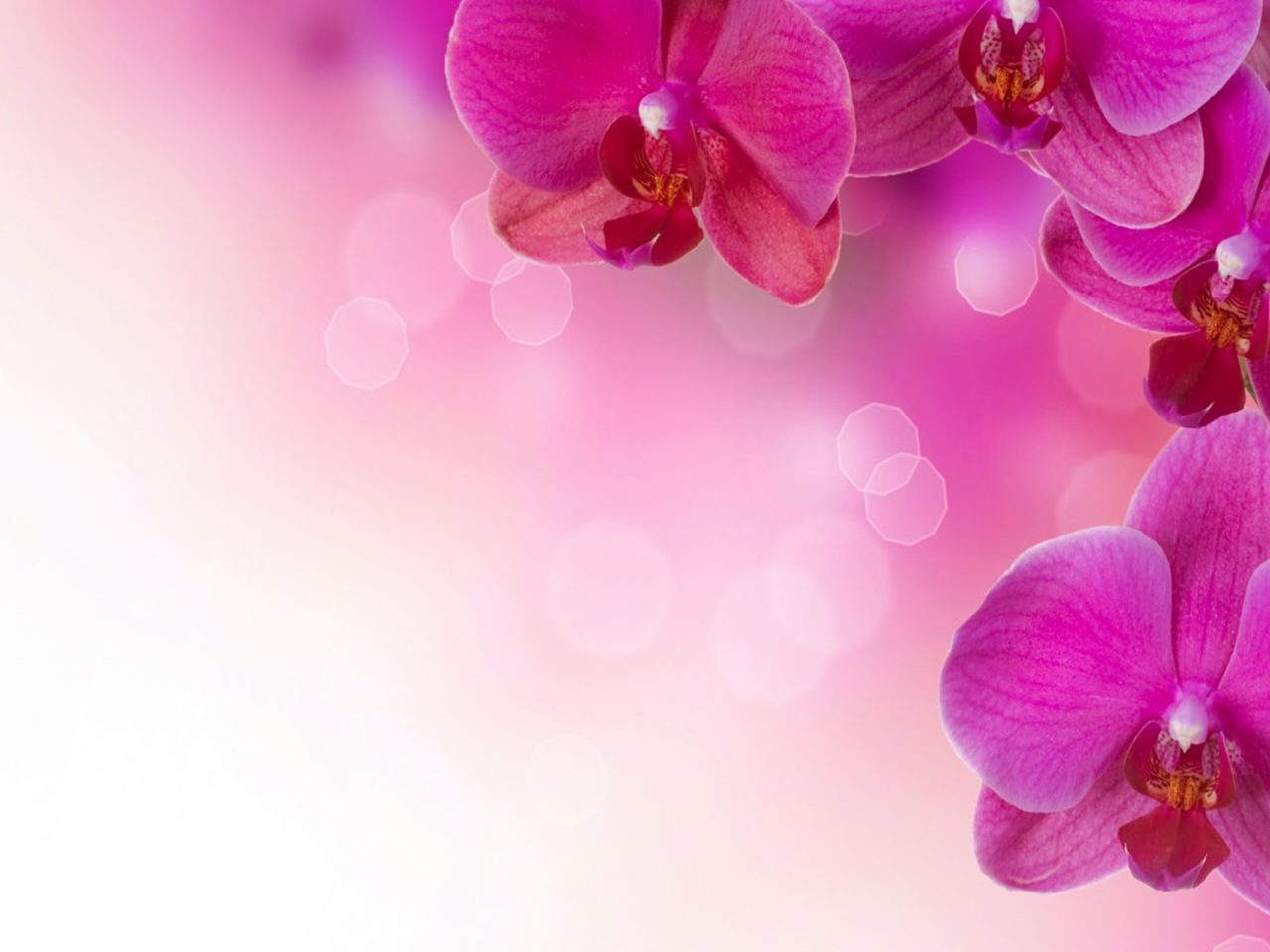 Fall Of The Autumn Hd Wallpaper Orchid Flower Petals Ultra Hd Desktop 2560x1600