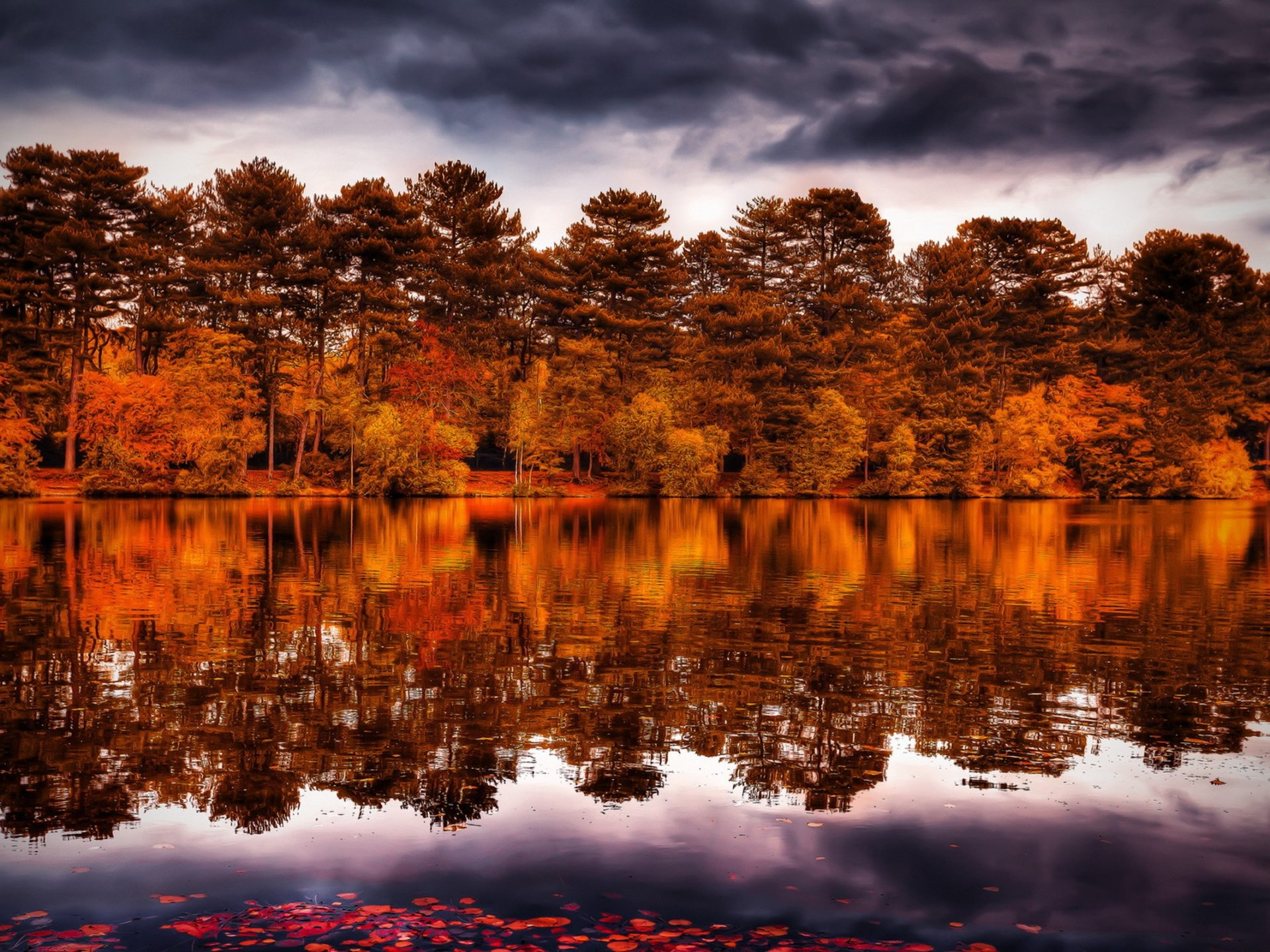 Wallpaper For Fall And Autumn Reflection Trees Forest Shore Autumn Fall Sky 2560x1600