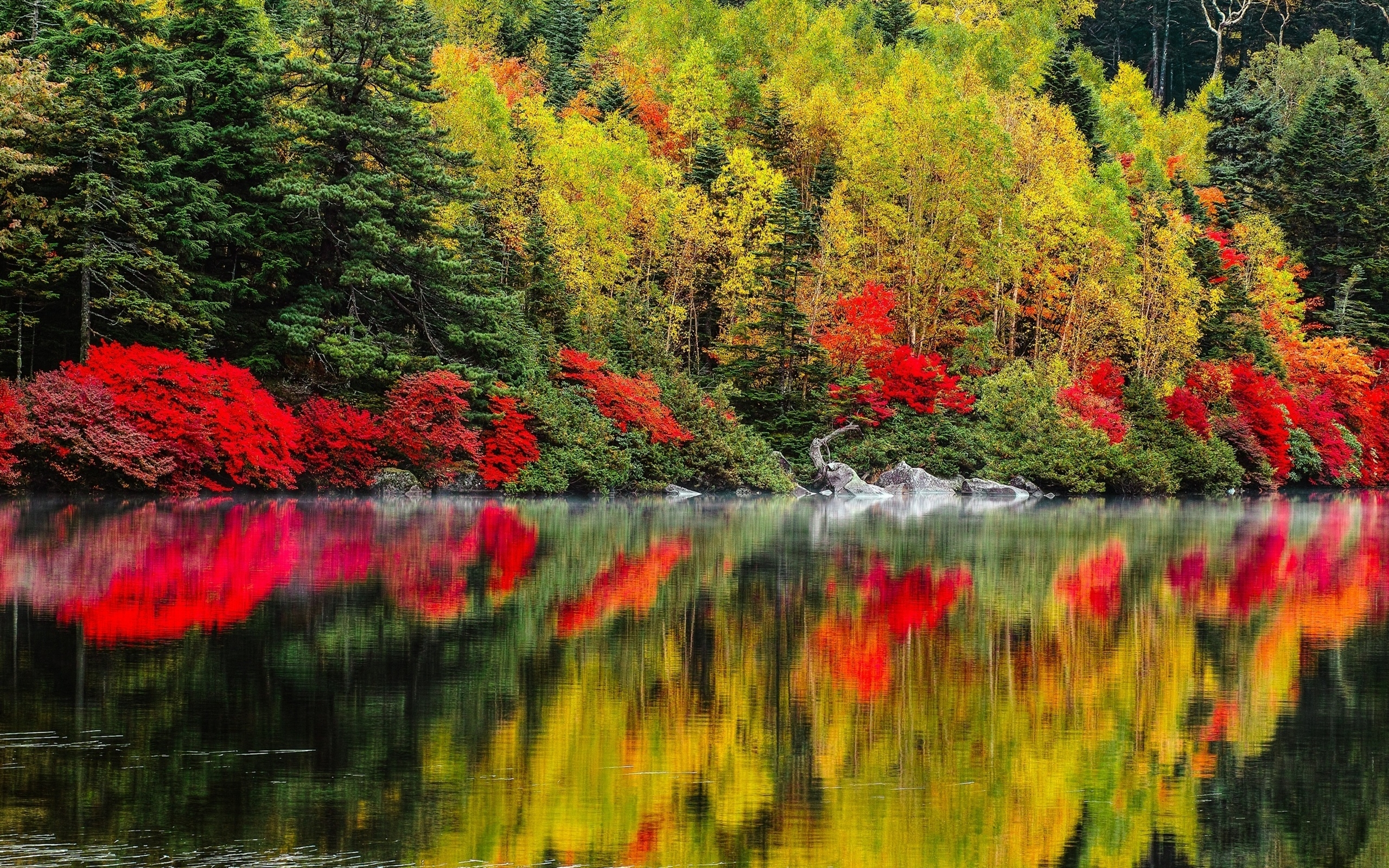 Happy Fall Wallpaper 1366x768 Reflections Nature Fall Pond Shore Forest Hd Wallpaper A