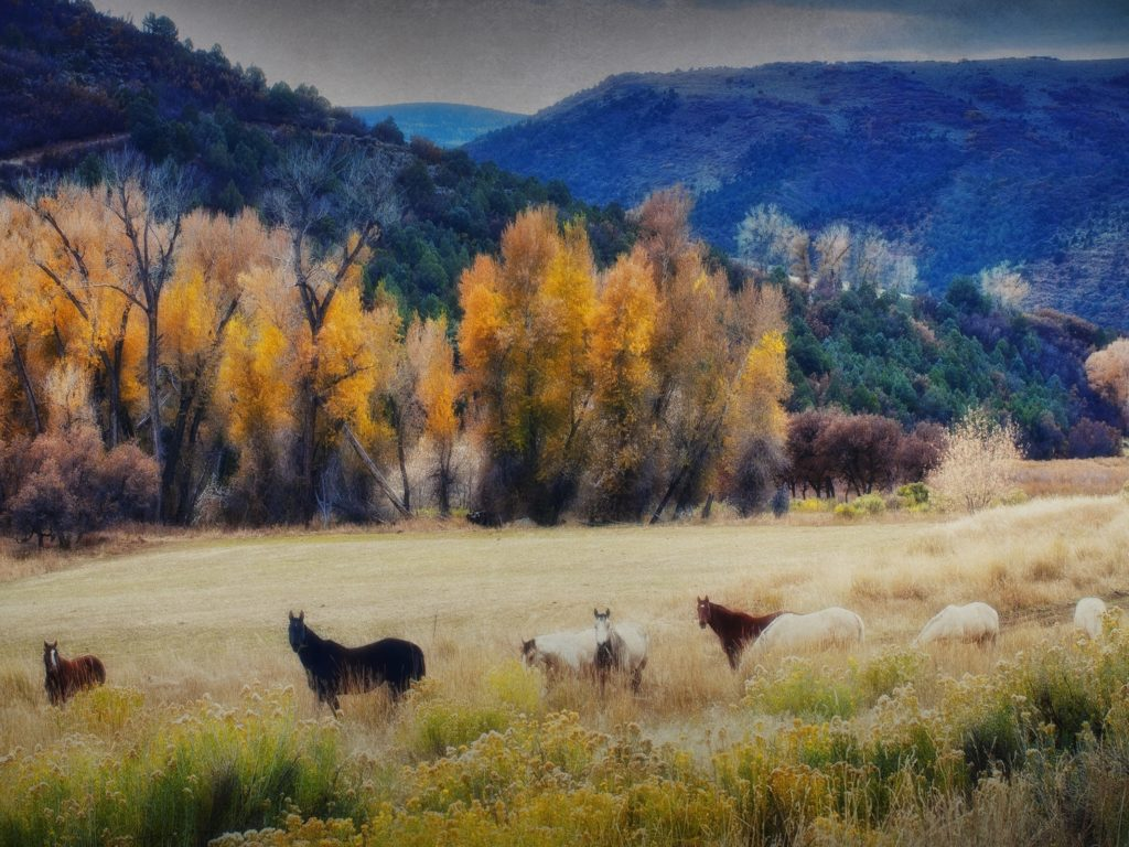 Free Fall Desktop Wallpaper Backgrounds Seasons Autumn Mountains Horses Trees Grass Hdr Nature