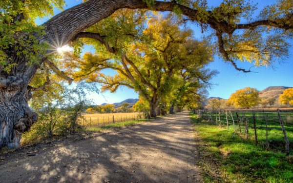 Fall Country Road Landscape