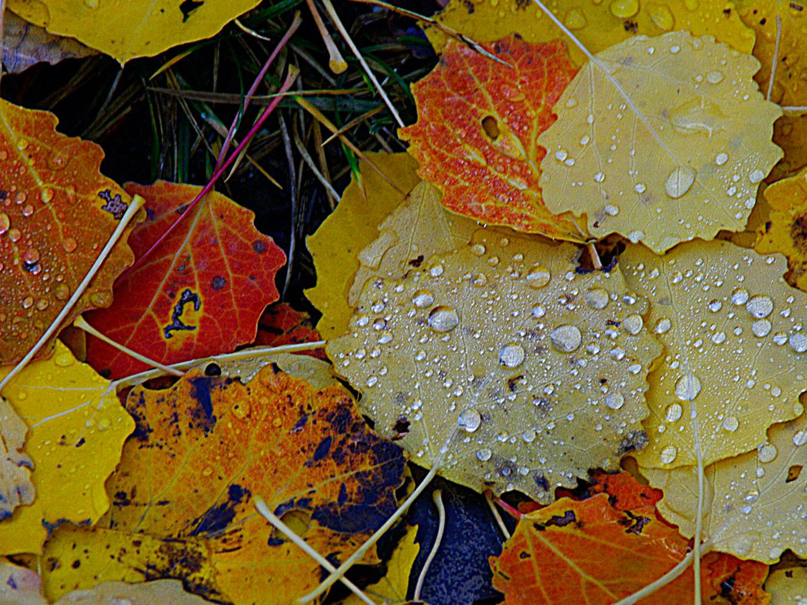 Red Fall Leaves Iphone Wallpaper Autumn Rain Yellow Leaves Background Hd 9472