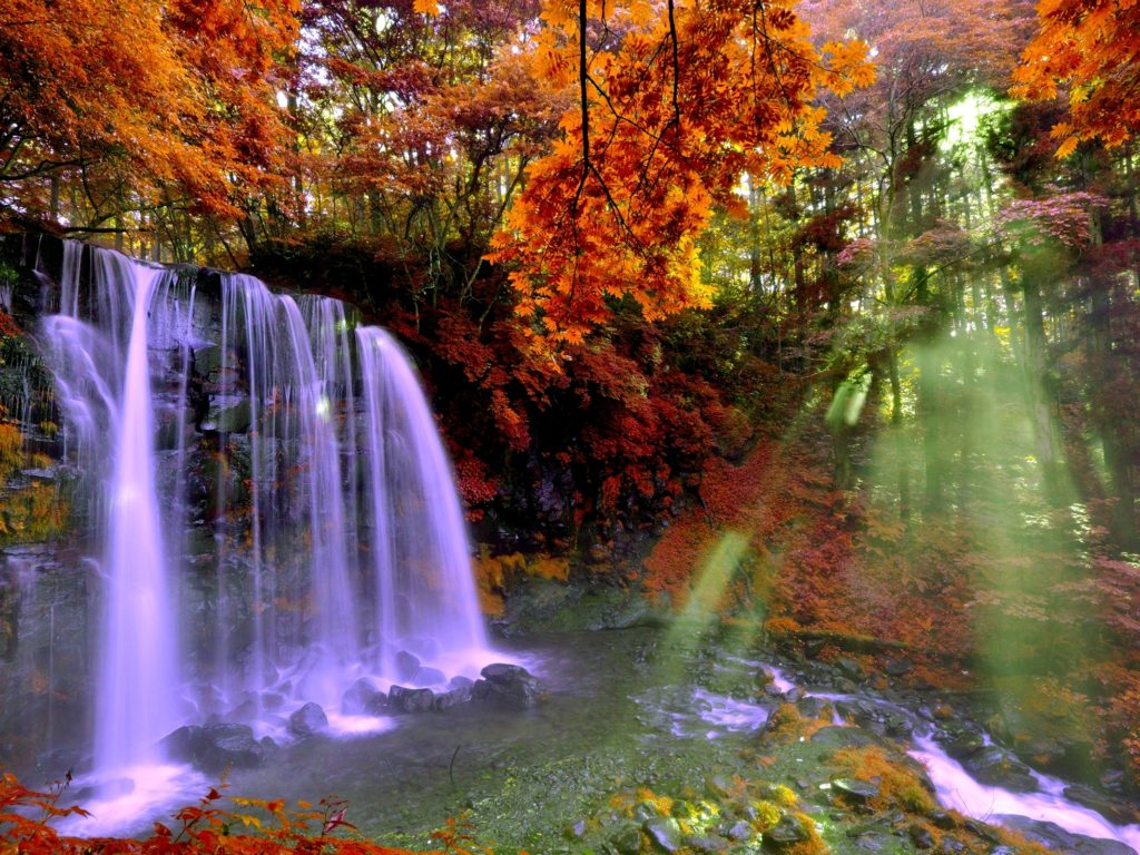 Desktop Wallpaper Fall Flowers Autumn Forest Falls 2560x1600 0876 Wallpapers13 Com