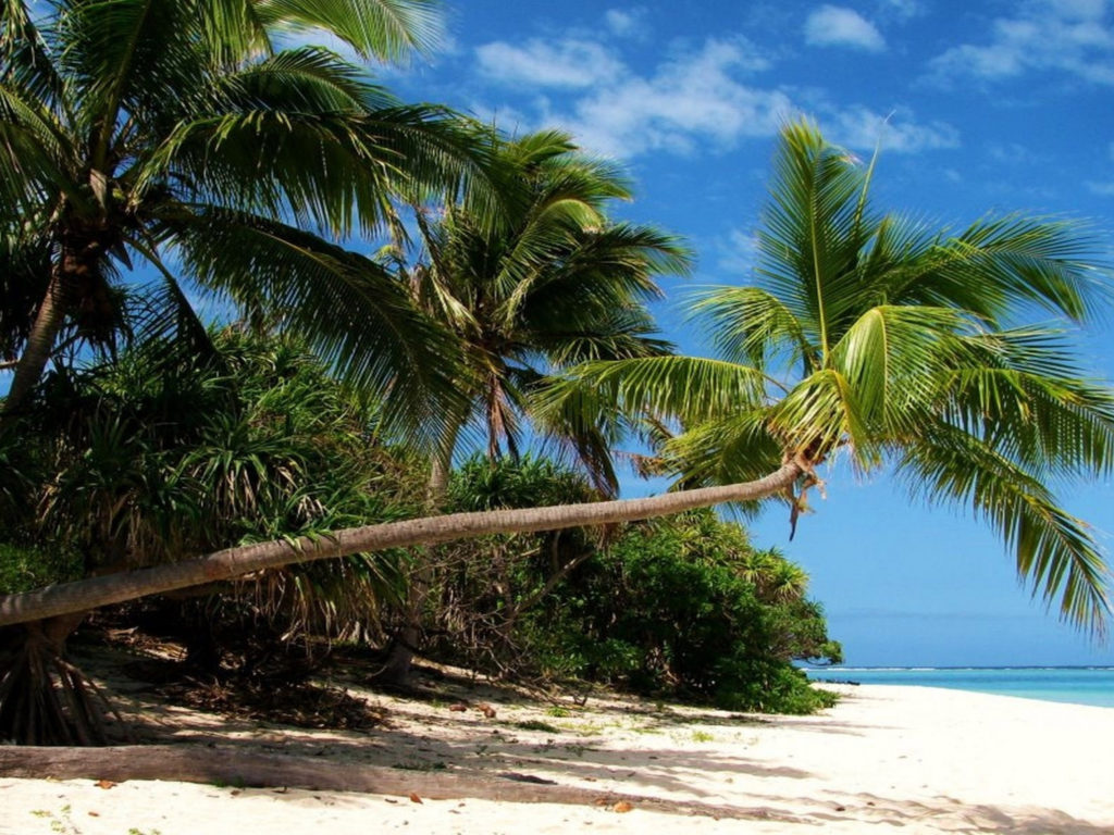 Beach With Palm Trees 2560x1600 Hd Wallpaper Beach With Palm Trees In Hd Quality Desktop
