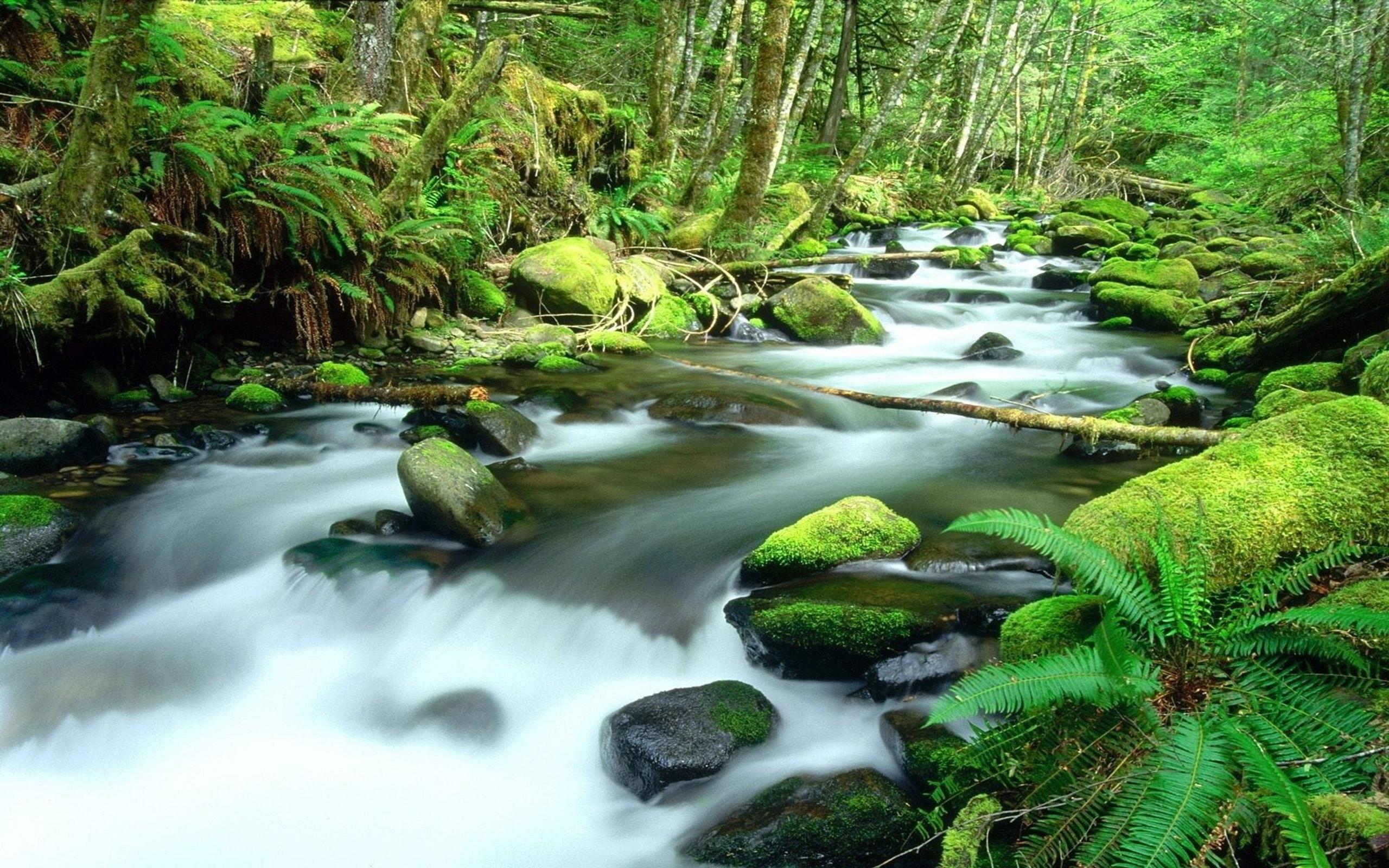 Mystic Falls Wallpaper Earth Daintree Rainforest Forest Beautiful Scenery