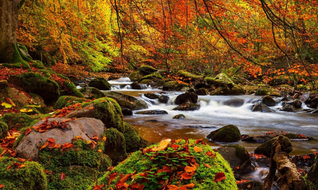 Free Disney Fall Wallpaper Fall Forest Stream Stones Moss Trees Ultra 3840x2160