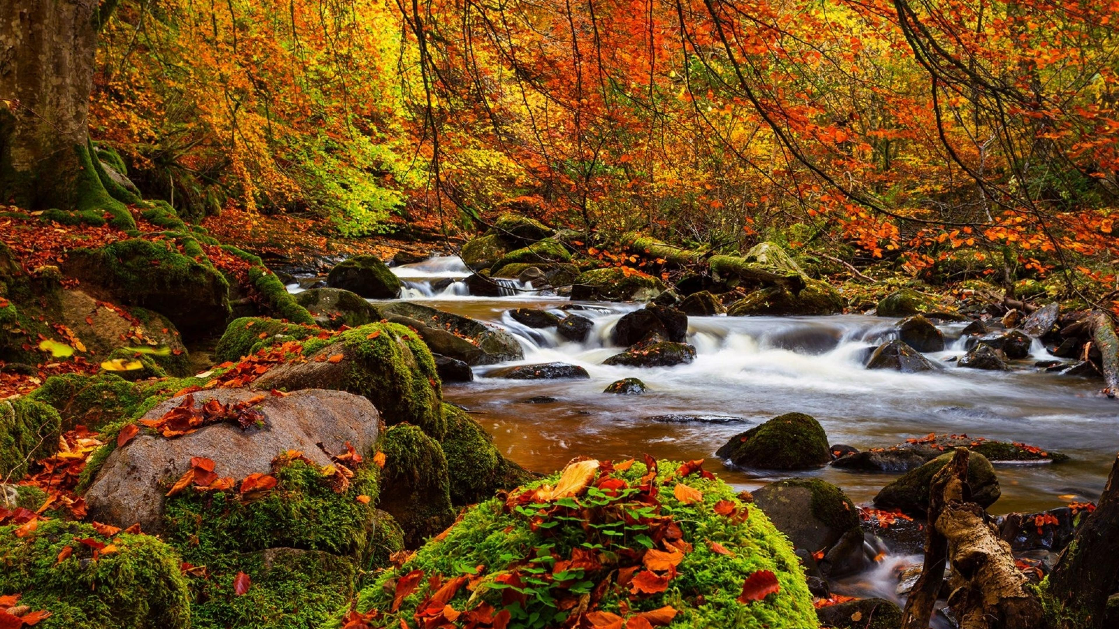 Fall Forest Stream Stones Moss Trees Ultra 3840x2160