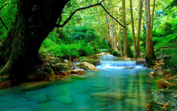 Forest River With Cascades Turquoise Water Rocks-trees