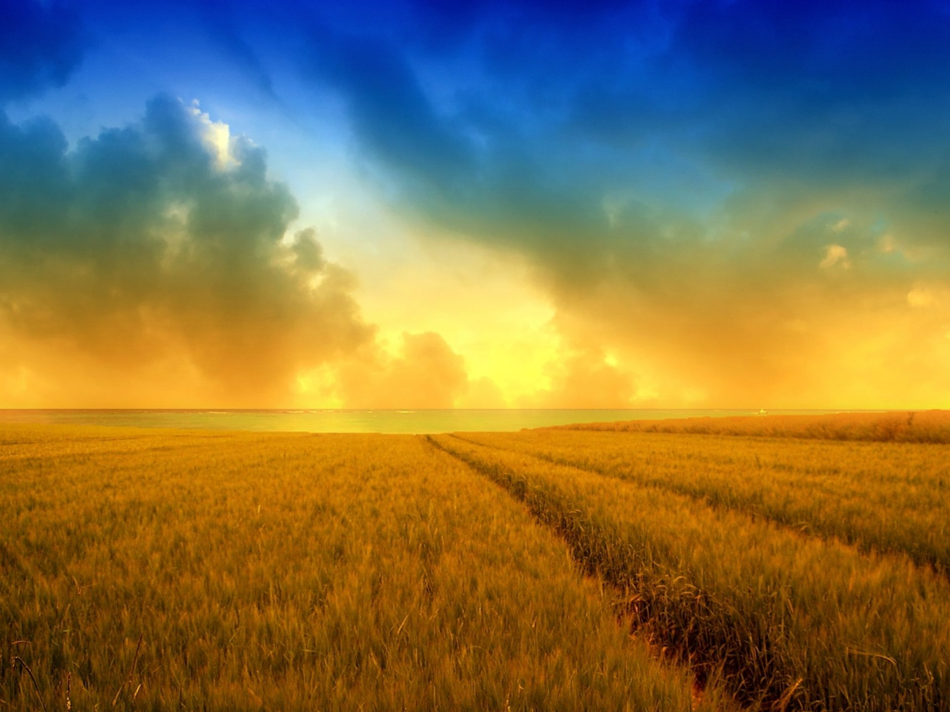 Desktop Wallpaper Fall Flowers Hd Wallpapers Golden Harvest Wheat Field 2560x1600